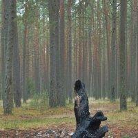 Хранитель лесного очага :: Kliwo