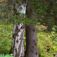 Два дерева. :: Наталья