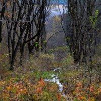 Лесной ручей :: Александр