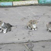 Сидят три кошки :: Дмитрий Никитин