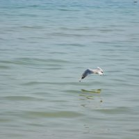 Море :: Полина Гудина