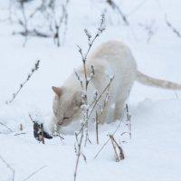 зимний кот :: Алена Д