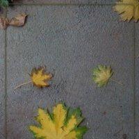 осень на дороге :: maxim