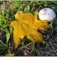 Осень :: алекс дичанский