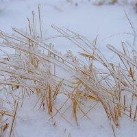После ледяного дождя :: Yukka 82
