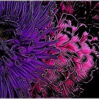 Цветы из космоса :: Нина Корешкова