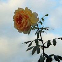 Небо и розочка :: Alexander Andronik