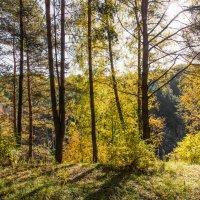 Осенний лес. :: Владимир Безбородов