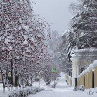 Снежно .. :: Alla Swan
