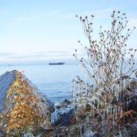 первый лед :: Седа Ковтун