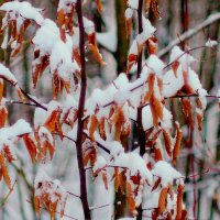 листья коричнево - белые :: Александр Прокудин