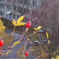 Прогулки по Солне :: liudmila drake