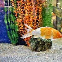 Рыбье царство :: Марина