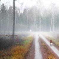 Туману вдогонку :: liudmila drake