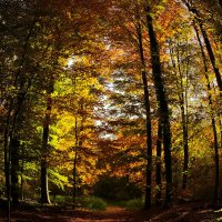 Осенняя бочка :: Alexander Andronik