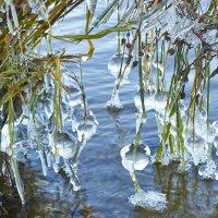 Ледяная гирлянда :: Седа Ковтун
