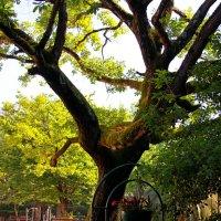 дерево :: Евгений