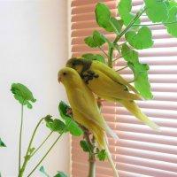 Домашняя птица :) :: Ольга Алеева
