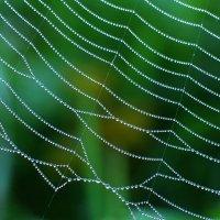 Жемчужное ожерелье паука. :: Владимир Гришин