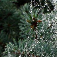 Новогодняя гирлянда паука. :: Владимир Гришин