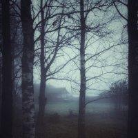 Туманное утро :: Наталья Ерёменко