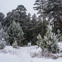 Я из лесу вышел, был сильный мороз... :: Андрей Поляков