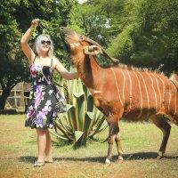 Девушка с антилопой Бонго в приюте для животных в Кении :: Ольга Петруша