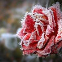 зимний макияж 2 :: Виктор Масальский
