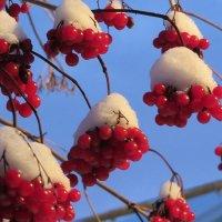Калиновые  снеговички. :: Виталий Селиванов