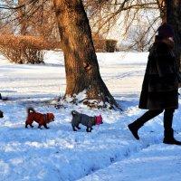 Дама с собачками гуляла одна... :: Анатолий Колосов