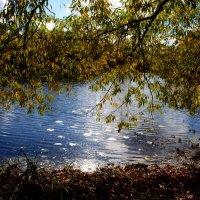 Отражают воды пруда небо, что синее сини... :: Ольга Русанова (olg-rusanowa2010)