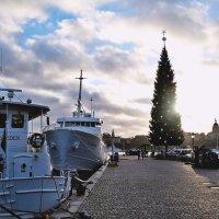Рождественская ёлка в Стокгольме :: Swetlana V