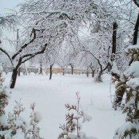 Žiemos pasaka Karsakiškyje / Winter tale in Karsakiškis :: silvestras gaiziunas gaiziunas