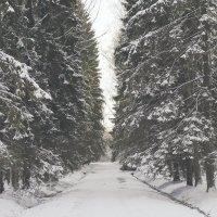 Прогулка по Павловску :: Кирилл