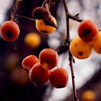 зимние яблоки :: Александр Прокудин