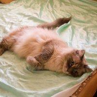 Как приятно понежиться в чистой постельке! :: Александр Куканов (Лотошинский)