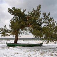 Бонсай с лодкой :: © ГраВИ