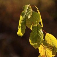 осенняя листва :: оксана