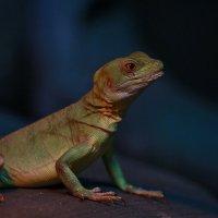 Рептилии Новосибирского зоопарка :: Владимир Шадрин