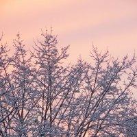 Розовый закат.... :: Наталья Полочанка