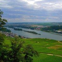 Виноградники на Рейне :: сергей
