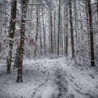 в зимнем лесу.. :: юрий иванов