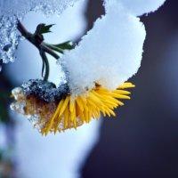 Первый снег :: Татьяна Евдокимова
