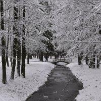 зима :: Светлана ***
