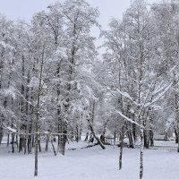 Первые зимние дни. :: Светлана ***