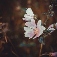 Цветы :: Ольга Геращенкова