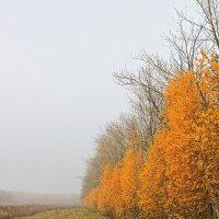 Яркая осень :: Марина Елизарьева