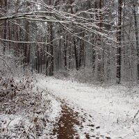 зима пришла :: оксана