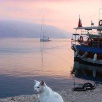 """...""""Я мечтаю о тихой гавани, где б мои корабли уснули"""" :: Борис Ряузов"""