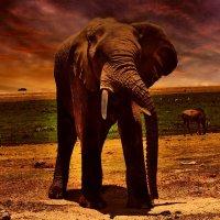 ЮАР Национальный зоопарк! :: Натали Пам